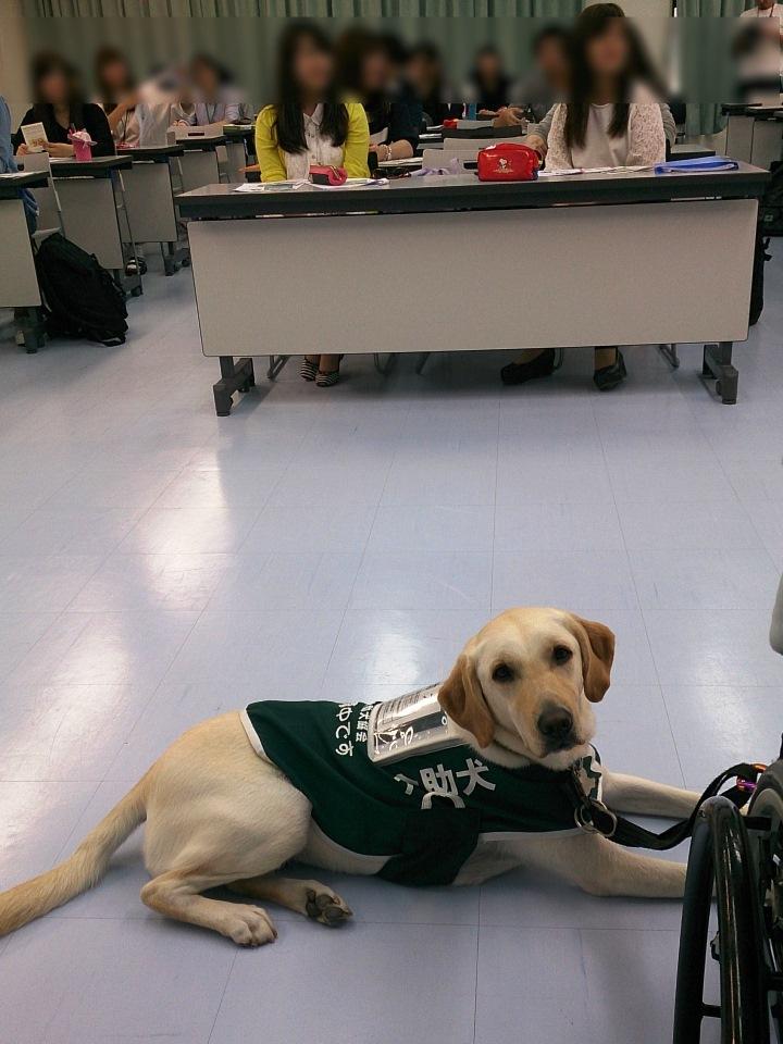 写真:大阪保健医療大学での講演中に…介助犬デイジー