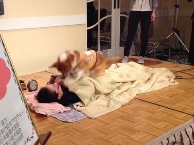 写真:聴導犬デモンストレーションの様子