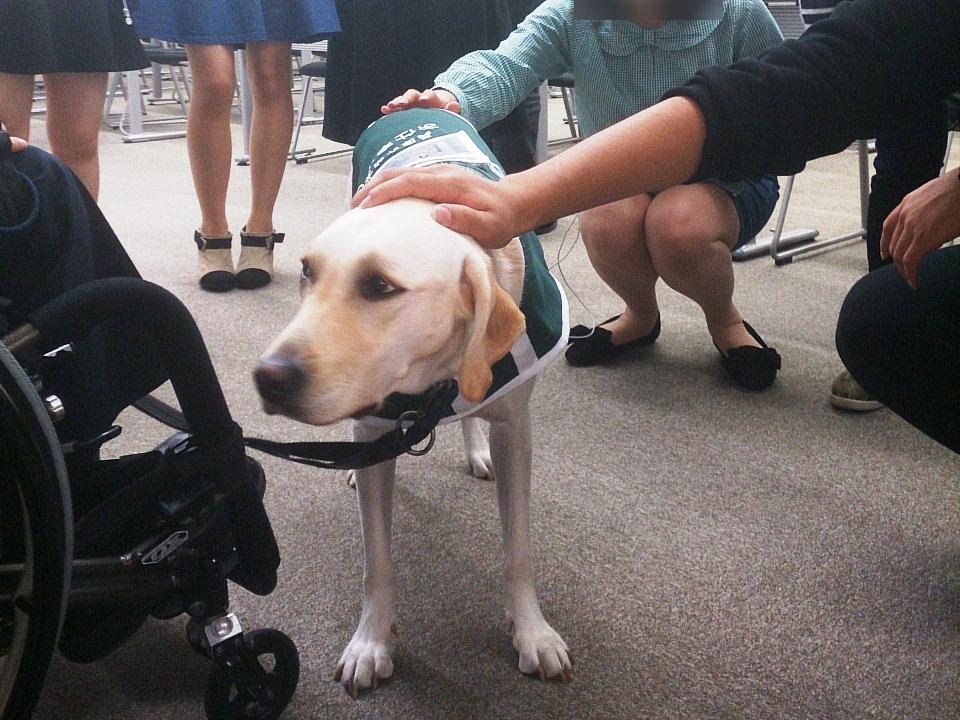 写真:関西学院大学での一コマ、大人気の(?)介助犬デイジー