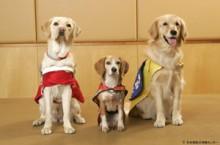 補助犬3種