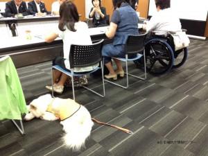 会議中も聴導犬は大人しく待機=爆睡中